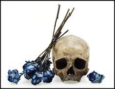 David Bailey - skulls and roses