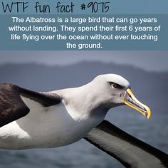 WTF Fun Facts is updated daily with interesting & funny random facts. We post about health, celebs/people, places, animals, history information and much more. New facts all day - every day! Wow Facts, Wtf Fun Facts, True Facts, Funny Facts, Strange Facts, Funny Memes, Hilarious, The More You Know, Good To Know