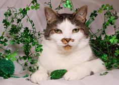 25 Ridiculously Cute St. Patrick's Day Pets