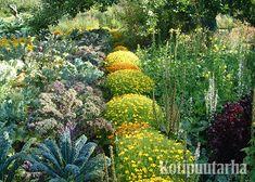 Sofieron linnan hyötytarhan tapetti-istutuksessa kukat ja vihannekset vuorottelevat sektoreittain. Plants, Plant, Planets