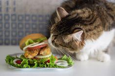 I'll just check the smell.... 🍔😼 #cat #catsofinstagram #Simas #cute #food #burger #yummy #tasty #allpetsgotokitchen #petsandthekitchen