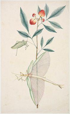 1787-1799 / by George Raper
