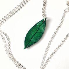 Avocado leaf