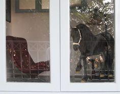 Fensterfolie - Fenstersticker No.276 Friesenstute - Fensterbilder