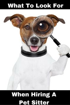 Do you know what questions to ask when hiring a pet sitter to make sure they will be the right fit to care for your fur-kids?  Check out article with examples of questions we think you should ask.:
