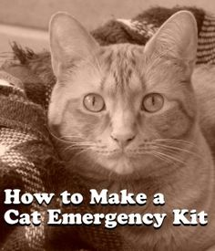 Learn how to make an emergency kit for your cat.