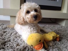 Ahh found ducky at last