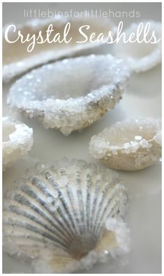 How To Make Crystal Seashells With Borax | Little Bins for Little Hands