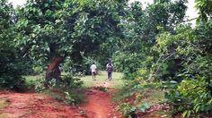 Tubed Forest