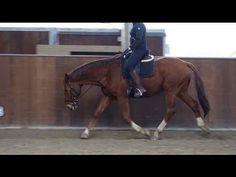 Ik leg uit waarom je een paard over de rug moet rijden en hoe je dat doet.