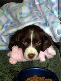Medium dog breeds on pinterest medium dogs dog breeds and large dog