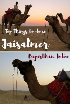 Things to do in jaisalmer Rajasthan India - Desert safari and glamping, exploring forts and palaces and the cuisine are amongst the few things to do in the golden city of Jaisalmer in Rajasthan, India.
