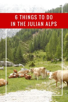 Slovenia's Julian Alps (including Triglav National Park) is an area of natural beauty and lots of outdoor activities. Options like hiking, biking, rafting, and more make a great trip! Learn more at http://thegirlandglobe.com/things-to-do-triglav-national-park/