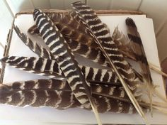 Large bird feathers Wild bird art by MossBetweenMyToes on Etsy