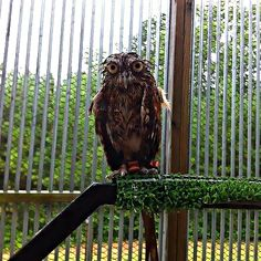 Owls Are NOT Waterproof.