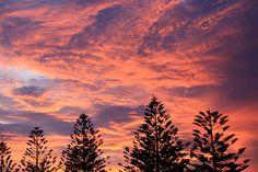 clouds over norfolk pines   por annieb