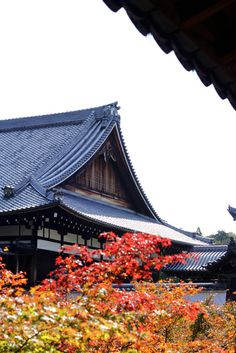 東福寺 Toufukuji, temple, Autumn foliage, Autumn colours, Kyoto