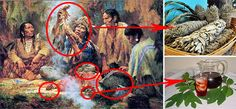 How Cherokees Used Trees of Southern Appalachia for Food, Medicine, and Craft