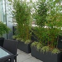 Bamboo fargesia is suitable for tubs on a terrace and allows you to make a j ., -The Bamboo fargesia is suitable for tubs on a terrace and allows you to make a j . Rooftop Garden, Balcony Garden, Diy Pergola, Pergola Kits, Balcony Design, Garden Design, Patio Privacy Screen, Garden Screening, Bamboo Plants