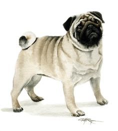 PUG Dog Watercolor Painting ART Print Signed by by k9artgallery