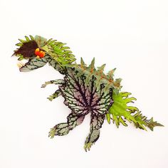 Dinosaur! Made from Jurassic Rex Begonia (really!), Under the Sea Coleus, and the poisonous Porcupine tomato.