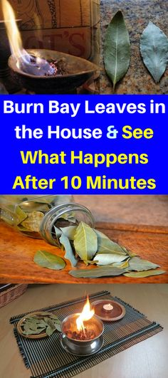 Burn Bay Leaves in the House and See What Happens After 10 Minutes – Healthy National