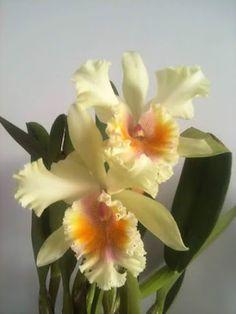 I Love Orchids - Comunidade - Google+