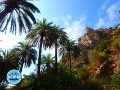 Apartment rental on Crete Greece 2021 Crete Greece, Rental Apartments, Island, Palms, Islands, Palm Trees
