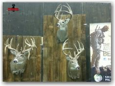 DHBB's latest post on 3rd annual Monster Buck Classic.
