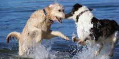 Reminders on how to take care of dogs in extreme heat this summer