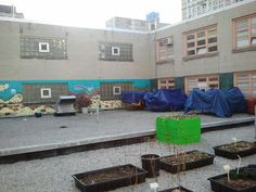 A NYC School Teams Up with Columbia to Build a Rooftop Garden and Classroom : TreeHugger