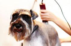 Машинка для стрижки собак: Полезный инструмент для груминга на дому Смотри больше http://kot-pes.com/mashinka-dlya-strizhki-sobak/