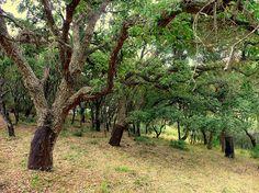 Cádiz: verde que te quiero verde - Parque Natural de Los Alcornocales