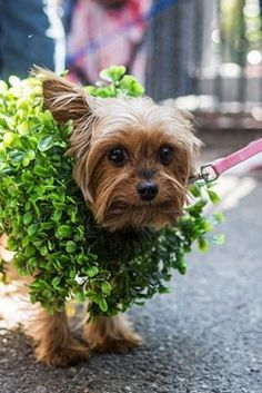 20 Ways to Dress Up Your Dog This Halloween via @PureWow
