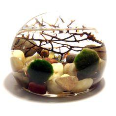 Marimo Card Holder Terrarium Aquarium Globe / Green Gift / Office Gift / Desk Art on Etsy, $22.00