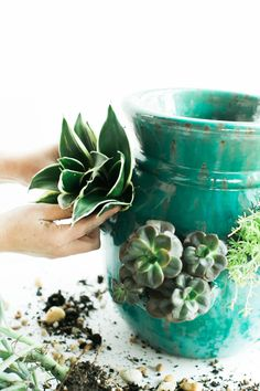 How container gardening can turn a black thumb green!
