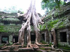 Old Tree at Angkor Wat, Cambodia   Wow, it's an onland Crackin! Very weird..