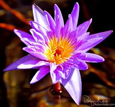 """""""Every flower is a soul blossoming in nature."""" ~Gerard de Nerval"""