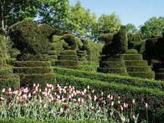 Ladew Topiary Gardens   (Maryland)