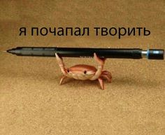 Pictures With Meaning, Stupid Pictures, Funny Pictures, Hello Memes, Russian Memes, Funny Mems, Cute Love Memes, Stupid Funny Memes, Reaction Pictures