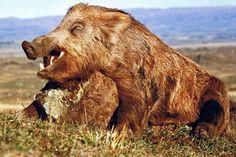 Different Breeds of Wild Hogs Boar Hunting, Hunting Dogs, Hog Pig, Wild Boar, Travel Light, Brown Bear, New Zealand, Wildlife, Wild Animals
