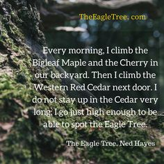 """""""Every morning, I climb the Bigleaf Maple and the Cherry in our backyard. Then I climb the Western Red Cedar next door. I do not stay up in the Cedar very long; I go just high enough to be able to spot the Eagle Tree. """"  from THE EAGLE TREE by Ned Hayes .................. (Little A Publishing, 2016)"""