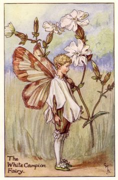 Flower Fairies - Cicely Mary Barker - 1925 - The White Campion Fairy, painted for the first edition of her book 'Flower Fairies of the Summer' (1925). For production reasons, this illustration no longer appears in the book today. Author / Illustrator Cicely Mary Barker