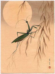 Japanese Culture ~ praying mantis