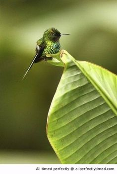 Little bird on a leaf – This little green bird is taking a break. Apparently it also blends in with its surrounding colors as well.