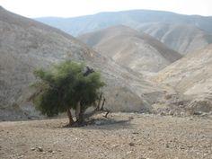File:Judean Desert Wadi Qelt.jpg