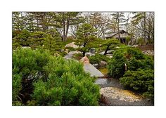 Japanese tea house at Como Conservatory in St. Paul, MN - Google ...