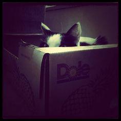 EXPERTS Confirm... Cat's Hiding Spot Not That Good