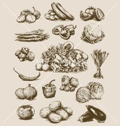 Hand drawn vegetables set vector by krookedeye on VectorStock®