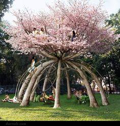 Japanese Cherry Blossom Tree  read story  http://reneefinberg.blogspot.com/2012/03/japanese-cherry-blossom-tree-house.html